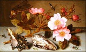 Still life depicting flowers, shells and a dragonfly