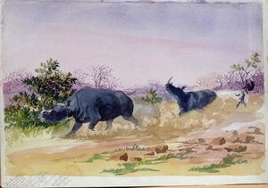 Naturalism painting reproductions: John Sawing's narrow escape from being run down by a couple of rhinoceros, north of the Makabie River, 1862