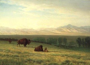 Reproduction oil paintings - Albert Bierstadt - Buffalo on the Plains, c.1890