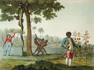 Portrait of Graman Quacy with his discovery Quaciae and the killing of a snake in Surinam, Guiana, illustration from 'Le Costume Ancien et Moderne'