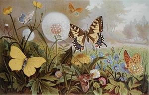 Butterflies, illustration from an Hungarian natural history book, c.1900