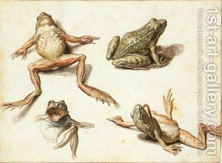 Four Studies of Frogs by Jacob de II Gheyn - Reproduction Oil Painting