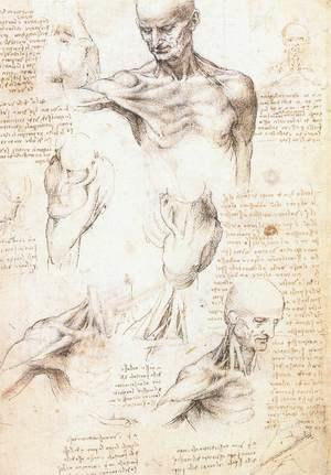 Reproduction oil paintings - Leonardo Da Vinci - Anatomical studies of a male shoulder