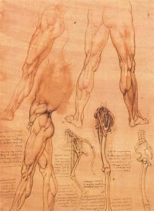 Reproduction oil paintings - Leonardo Da Vinci - Studies of legs of man and the leg of a horse