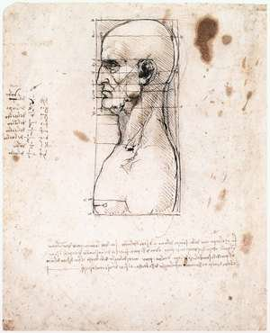 Reproduction oil paintings - Leonardo Da Vinci - Male head in profile with proportions