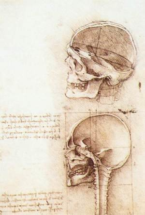 Reproduction oil paintings - Leonardo Da Vinci - Studies of human skull