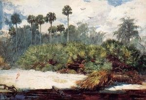 Famous paintings of Rainforests & Jungles: In a Florida Jungle