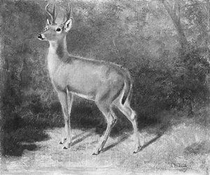 Reproduction oil paintings - Arthur Fitzwilliam Tait - Deer--Sketch from Nature