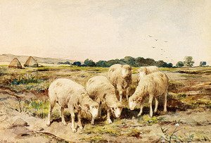 Reproduction oil paintings - Anton Mauve - Grazing Sheep
