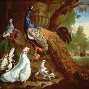 Oil painting reproductions - Naturalism - Pieter Casteels: A Peacock in a Classical Landscape, 1719