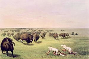 Famous paintings of Indians: Hunting Buffalo Camouflaged with Wolf Skins, c.1832