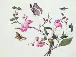 Famous paintings of Butterflies: Japonica, Magnolia and Butterflies