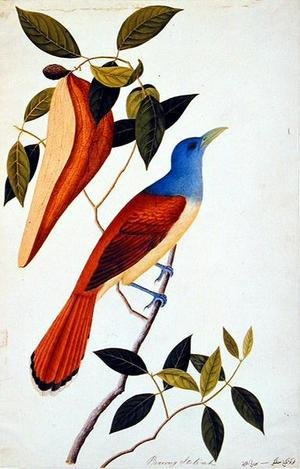 Reproduction oil paintings - Anonymous Artist - Boorong Seli-ah, from 'Drawings of Birds from Malacca', c.1805-18
