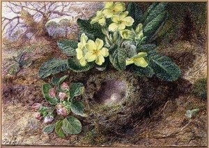 Still Life with Primroses and Birds Nest