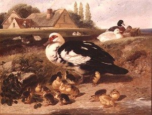 Famous paintings of Ducks: Ducks and Ducklings