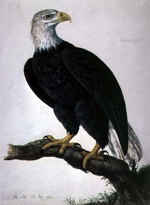 Famous paintings of Antelope: White-headed Sea Eagle