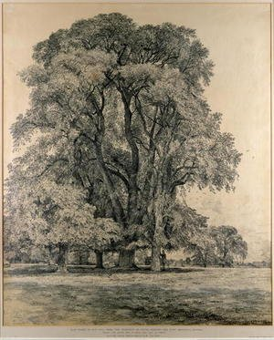 Reproduction oil paintings - John Constable - Elm trees in Old Hall Park, East Bergholt, 1817