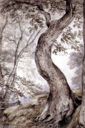 Reproduction oil paintings - John Constable - Tree at Helmingham, c.1800
