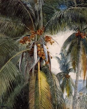 Reproduction oil paintings - Winslow Homer - Coconut Palms, Key West