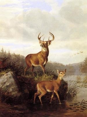 Arthur Fitzwilliam Tait reproductions - Buck and Doe