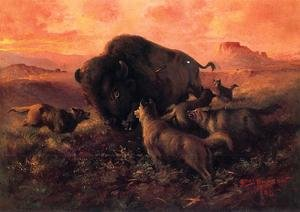 The Wounded Buffalo