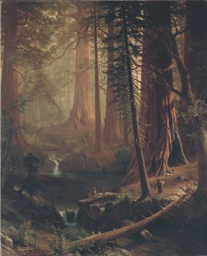 Famous paintings of Nautical: Giant Redwood Trees of California
