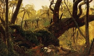 Famous paintings of Rainforests & Jungles: Rain Forest, Jamaica, West Indies