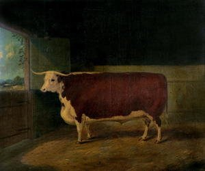 Realism painting reproductions: Portrait of a Prize Hereford Steer, 1874