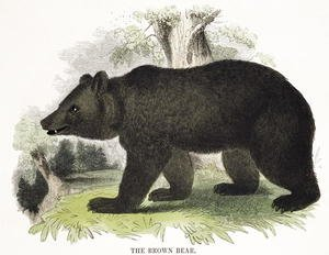 The Brown Bear, educational illustration pub. by the Society for Promoting Christian Knowledge, 1843