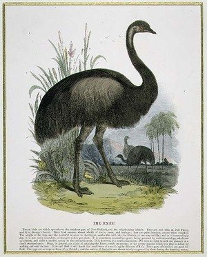 Reproduction oil paintings - Josiah Wood Whymper - The Emu, educational illustration pub. by the Society for Promoting Christian Knowledge, 1843