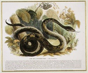 Reproduction oil paintings - Josiah Wood Whymper - The Boa Constrictor, educational illustration pub. by the Society for Promoting Christian Knowledge, 1843