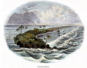 Reproduction oil paintings - Josiah Wood Whymper - Coral-Reefs, from Phenomena of Nature, 1849