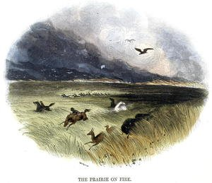 Reproduction oil paintings - Josiah Wood Whymper - Prairie on Fire, from Phenomena of Nature, 1849