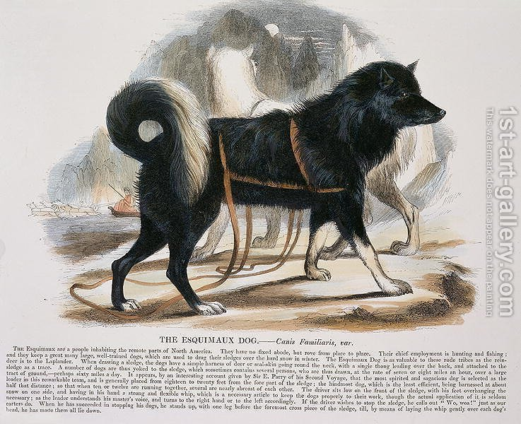 Huge version of The Esquimaux Dog (Canis familiaris) educational illustration pub. by the Society for Promoting Christian Knowledge, 1843
