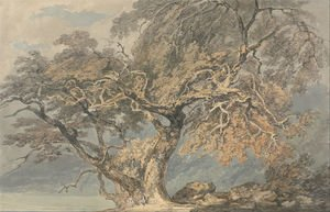 Romanticism painting reproductions: A Great Tree, c.1796