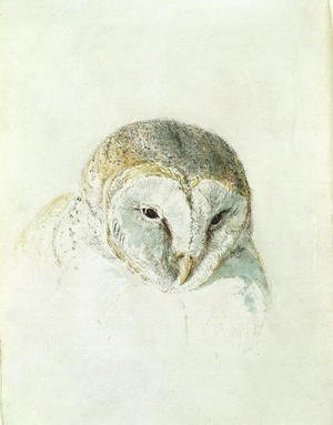 Romanticism painting reproductions: White Barn Owl, from The Farnley Book of Birds, c.1816