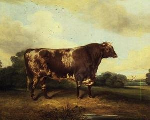 Brown and White Bull in Landscape
