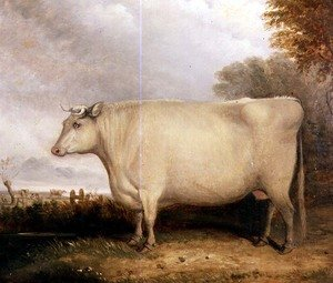 Portrait of a prize cow