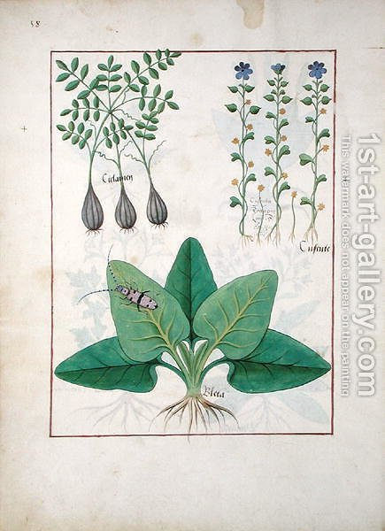 Robinet Testard: Illustration from the Book of Simple Medicines by Mattheaus Platearius d.c.1161 c.1470 40 - reproduction oil painting