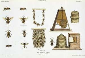 Bees and bee-keeping, from The Young Landsman, published Vienna, 1845