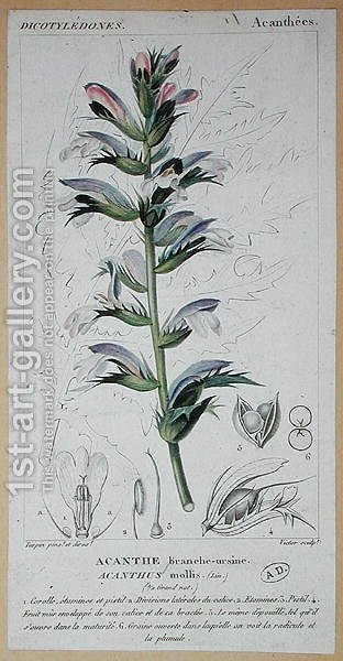 Pierre Jean Francois Turpin: Acanthus Mollis, c.1820 - reproduction oil painting