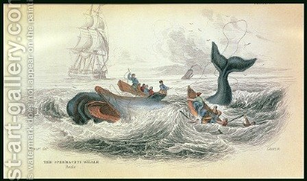 The Spermaceti Whale, engraved by William Home Lizars 1788-1859 plate 10 from Vol 12 of Sir William Jardines Naturalists Library, pub. 1833-45 by (after) Stewart, James - Reproduction Oil Painting