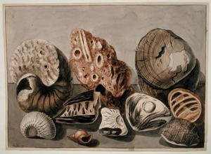 Academic Classicism painting reproductions: Still Life with shells and fossils