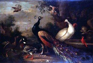 Tobias Stranover reproductions - Exotic Birds