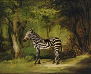 Romanticism painting reproductions: A Zebra, 1763