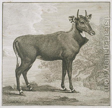 Plate of the Nyl-ghan, engraved by James Basire 1730-1802 by (after) Stubbs, George - Reproduction Oil Painting