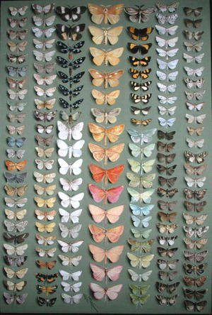 Famous paintings of Butterflies: One Hundred and Fifty-eight Butterflies