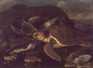 Still Life with a Fish and a Tortoise