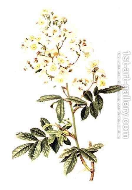 Rosa multiflora by Alfred Parsons - Reproduction Oil Painting
