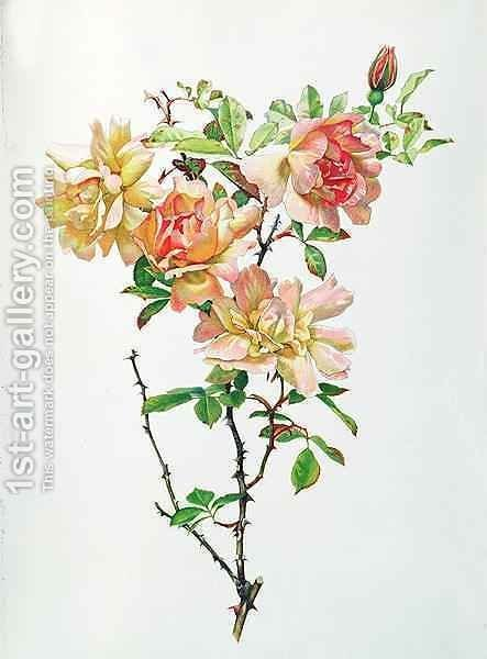 Rosa Chinensis by Alfred Parsons - Reproduction Oil Painting